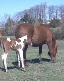 sonny_and_foal.jpg